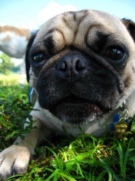 miyagi_puppy_dog_park.jpg