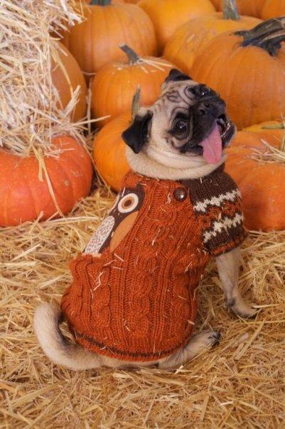 miyagi_oakland_temescal_pumpkin_patch.jpg