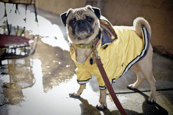miyagi_rain_coat_puddles.jpg