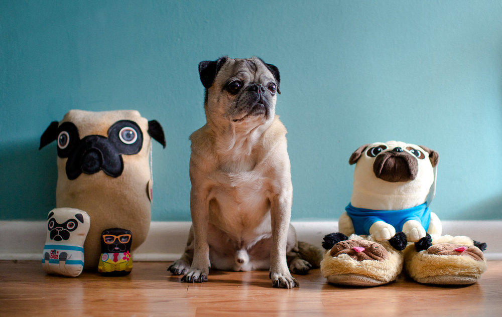 pug_with_pug_friends.jpg