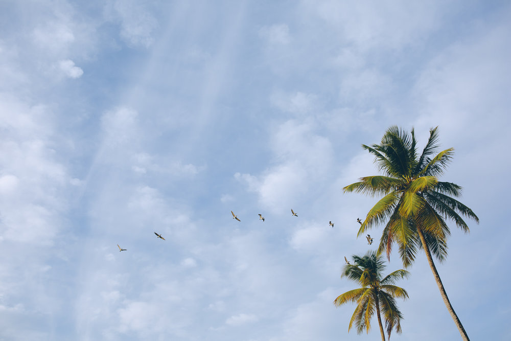 tobago-vacation-pigeon-point-19.jpg