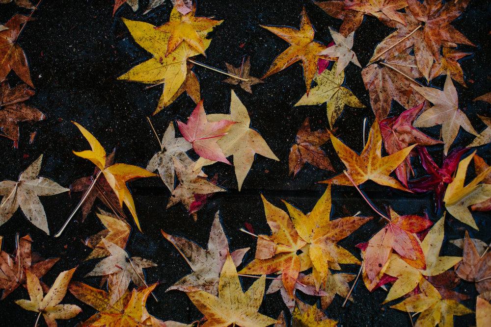 fall_leaves_rainy_weather_oakland_california