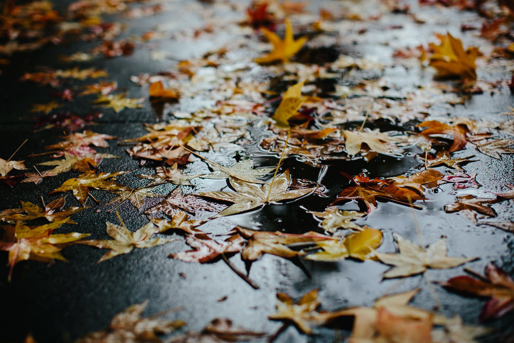 fall_leaves_rainy_day_oakland_california_weather