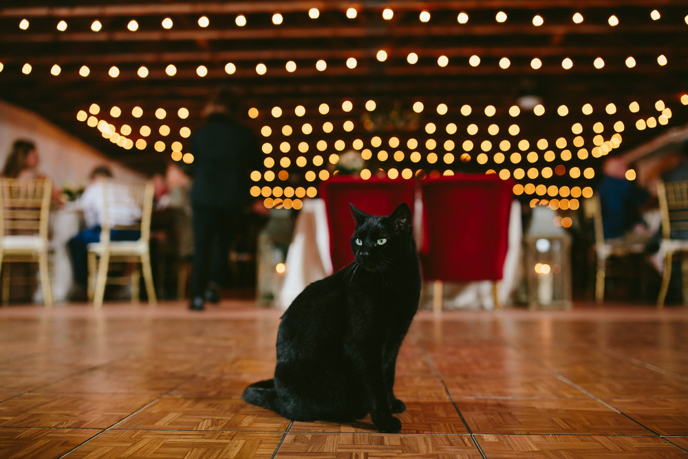 cat showed up to a wedding reception at flamingo gardens in south florida