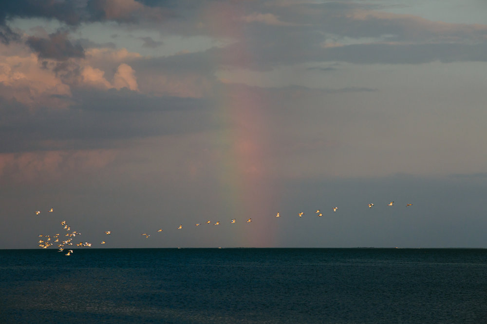 birds flying past a rainbow during a wedding ceremony at thalatta estate in miami florida