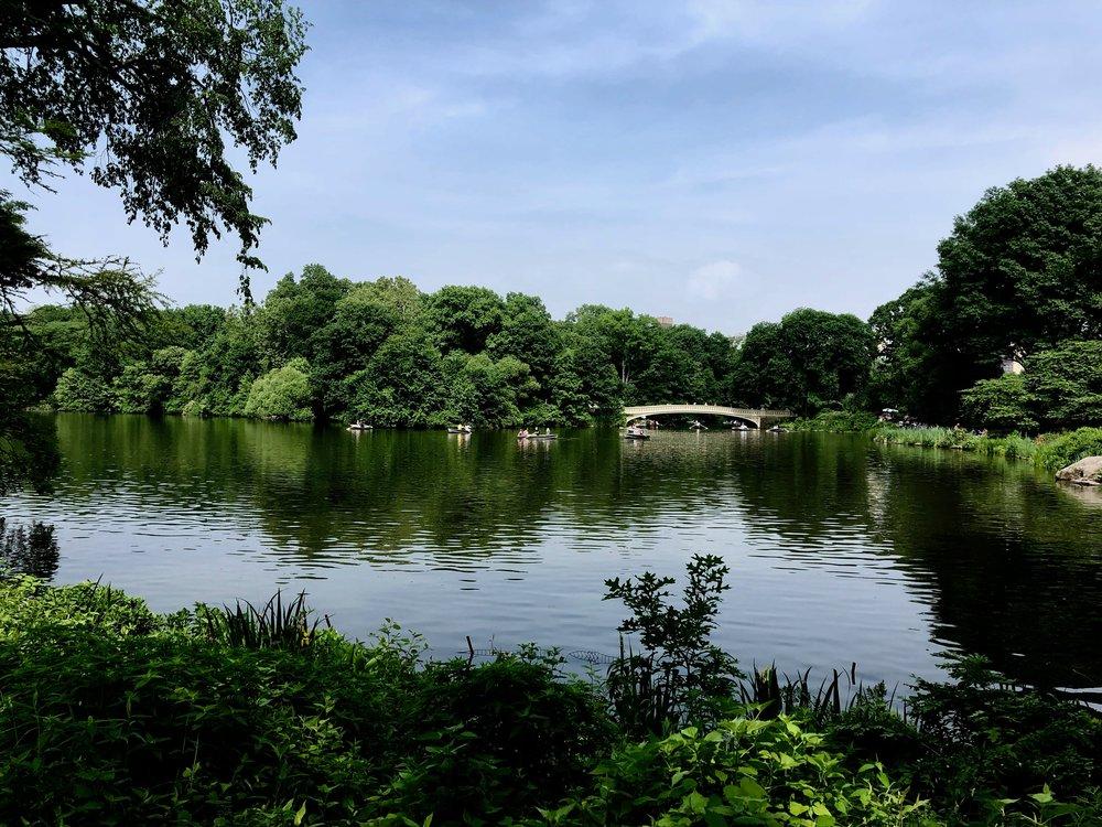 Image taken by Samantha McHenry, Strawberry Fields - Central Park, 2018.