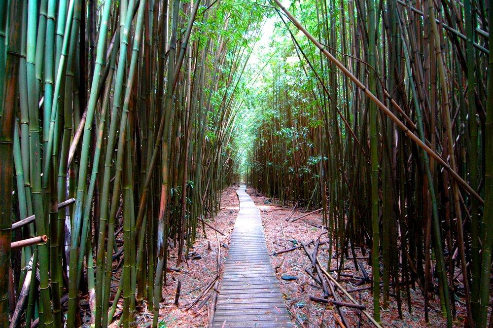 bamboolarge.jpg