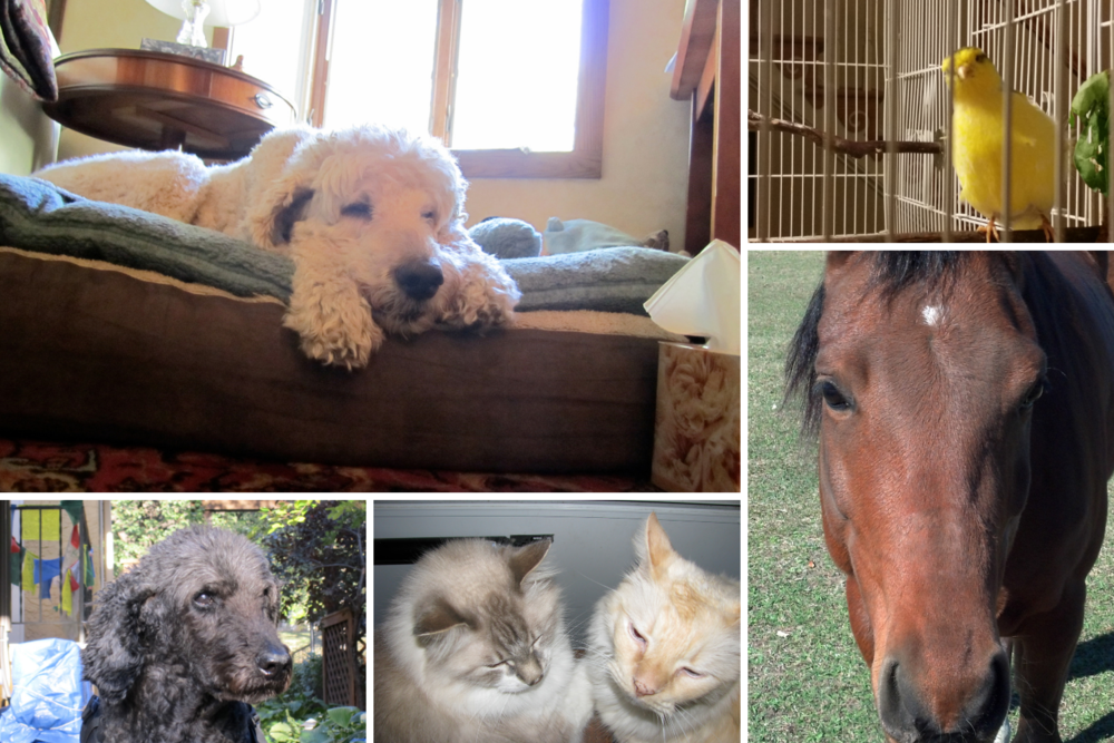 Client Testimonials - See what my lovely clients have to say about my work with their animal friends.