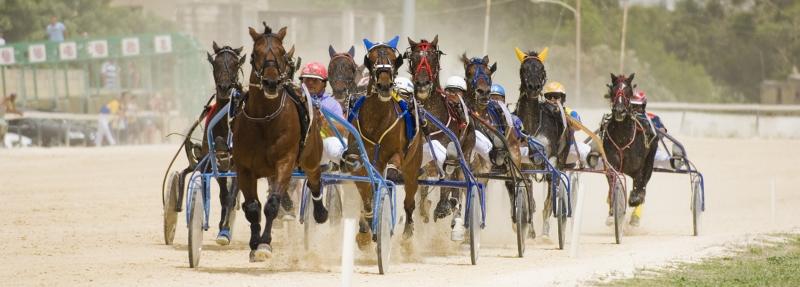 Horse_Racing_2 (800x287).jpg
