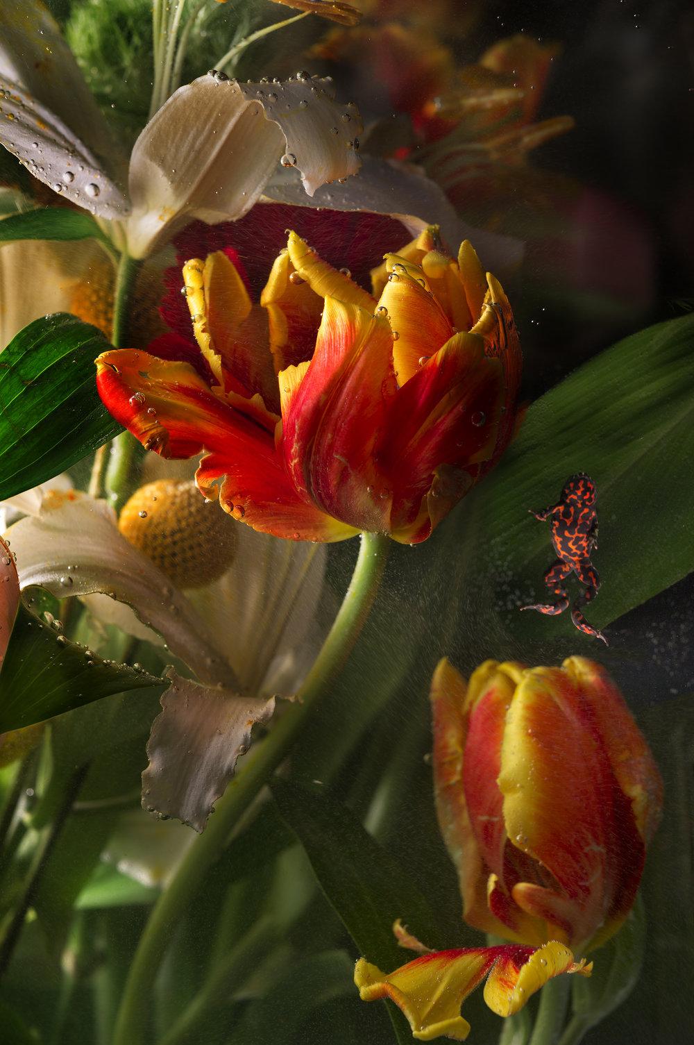 Flowers & Frog II