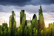 green-skyline_crop180x120.jpg