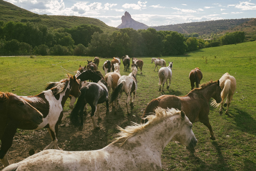 Horses-out to pasture.jpg