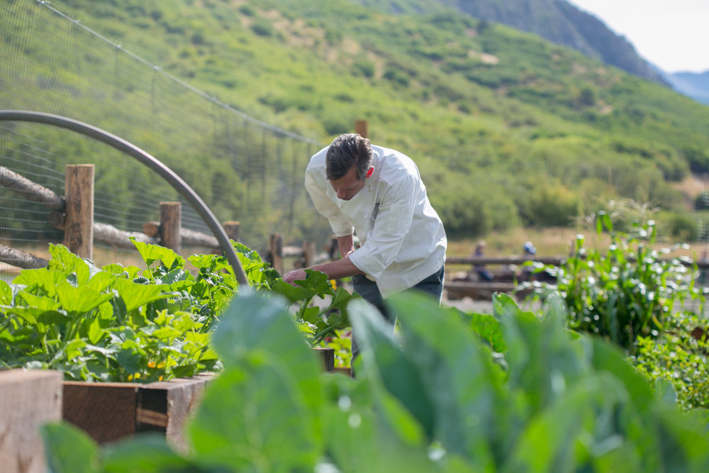 30-Chef Harvesting from Smith Fork Farmstead - photo by Phillip Van Nostrand.jpg