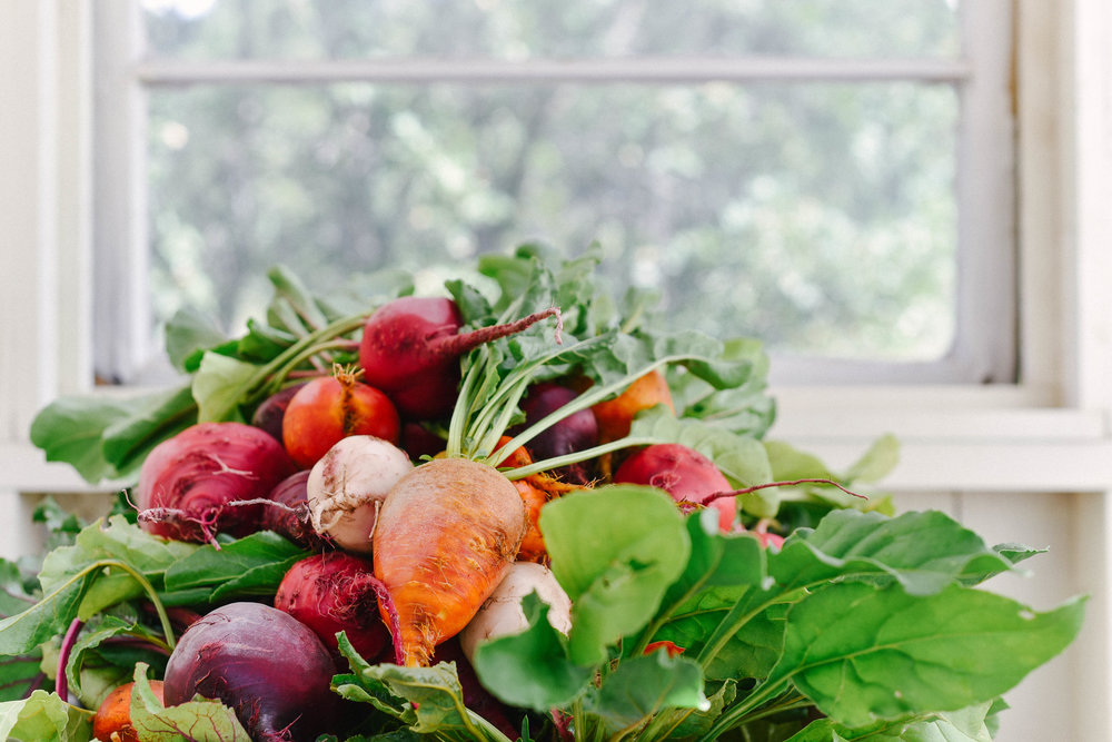 Beets in Washing Shed.jpg