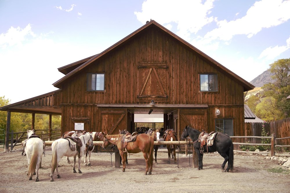 Proud Horses at the Tack Barn