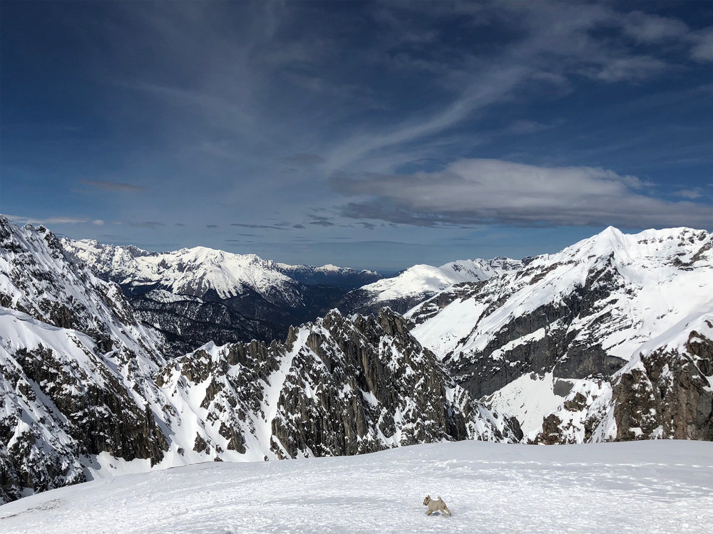 """Dog on Mountain"" Hafelekar Peak. Tyrol, Austria"
