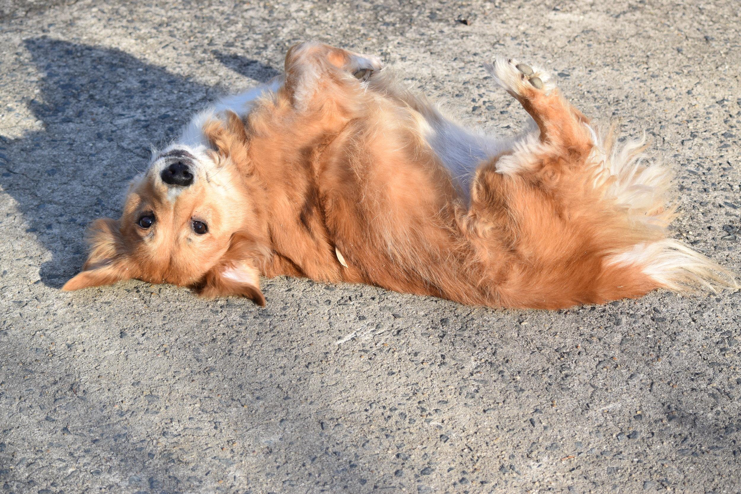 See Spot Run pet sitter