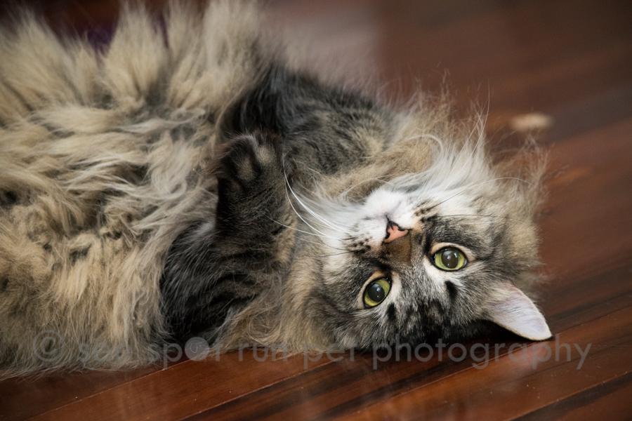 upside down Chloe