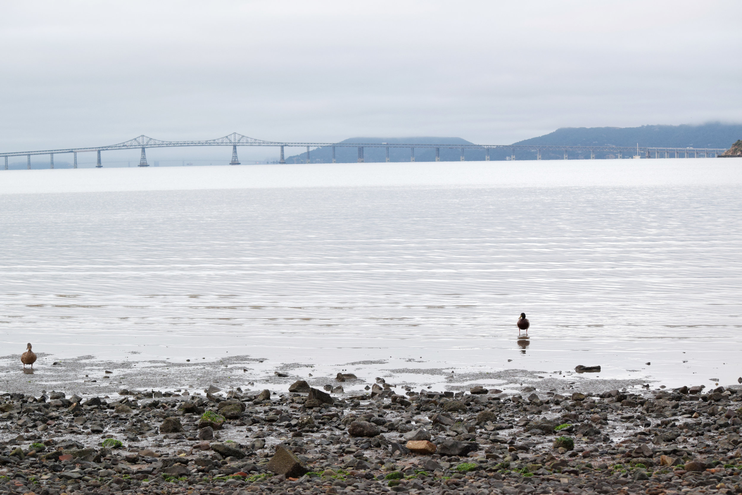 San Pablo Bay with the Richmond Bridge in the background