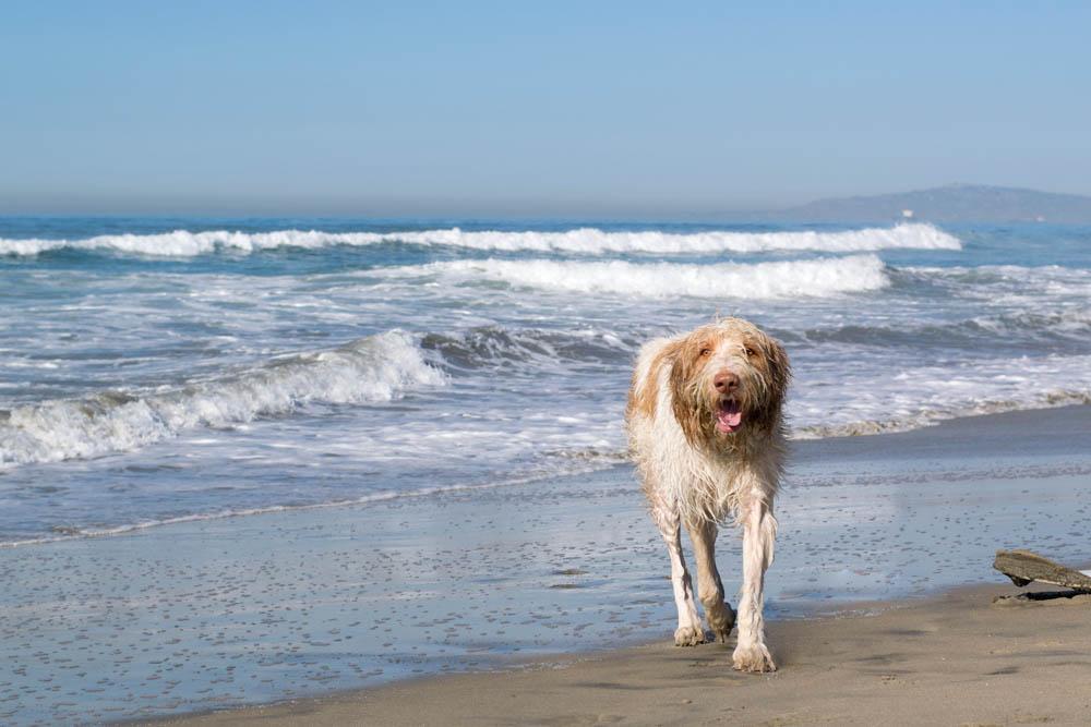 Huntington Beach Dog Park
