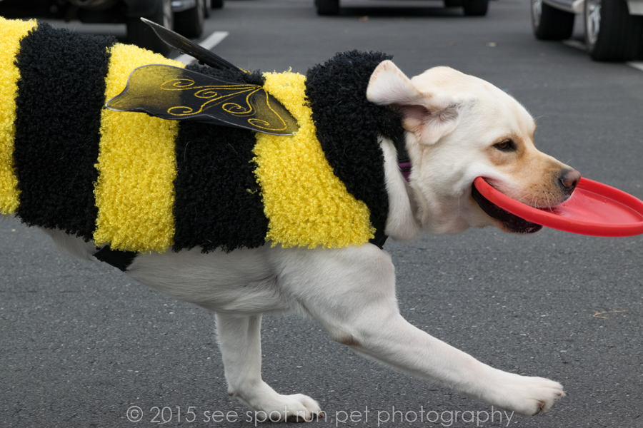 2015 in Review, lab dressed as a bee