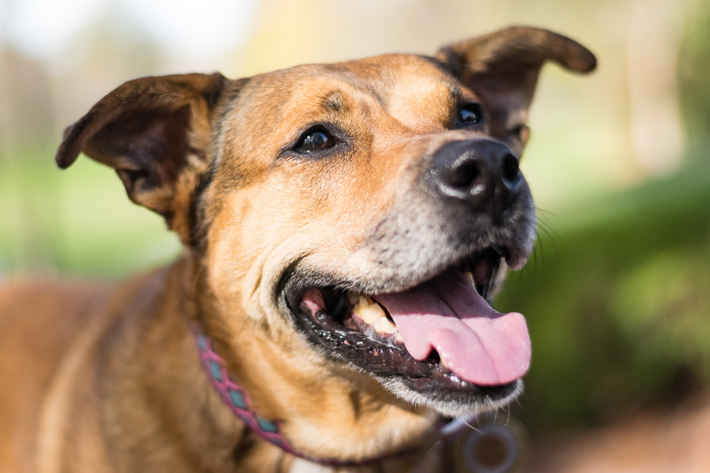 dog trainer's dog Bella