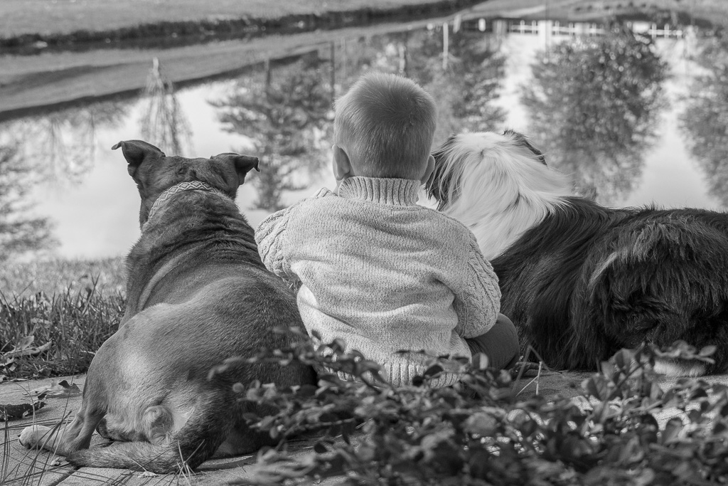 2015 in review, a boy and his dogs