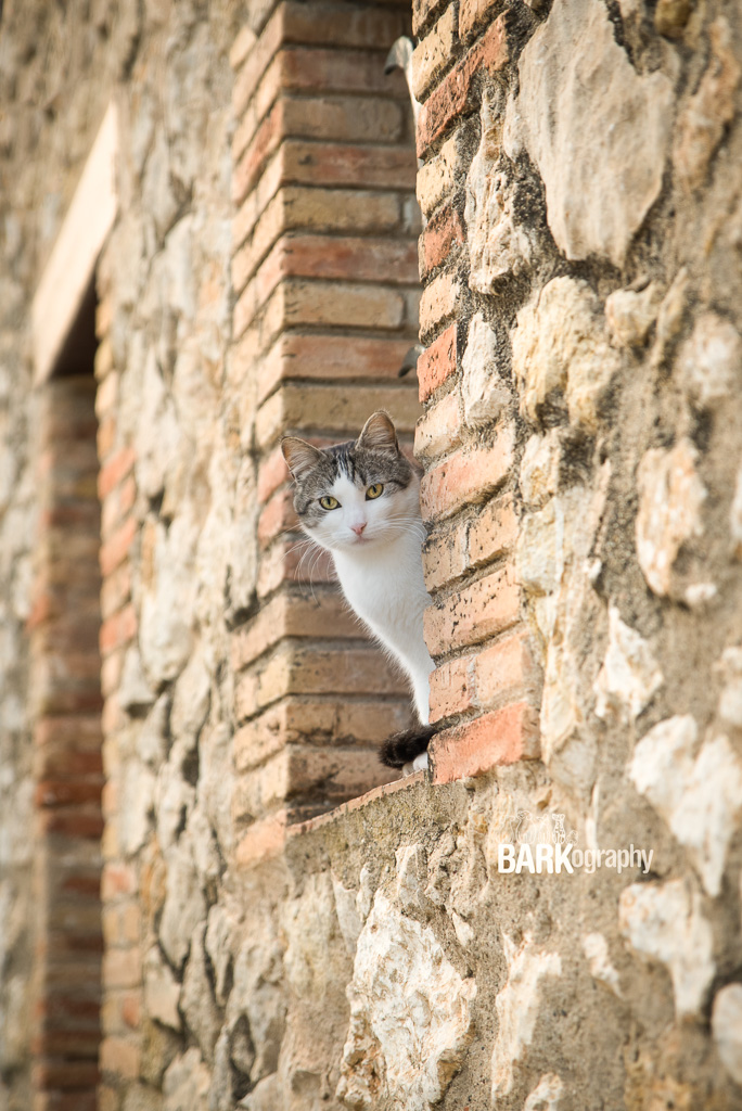cat in Olivella Spain