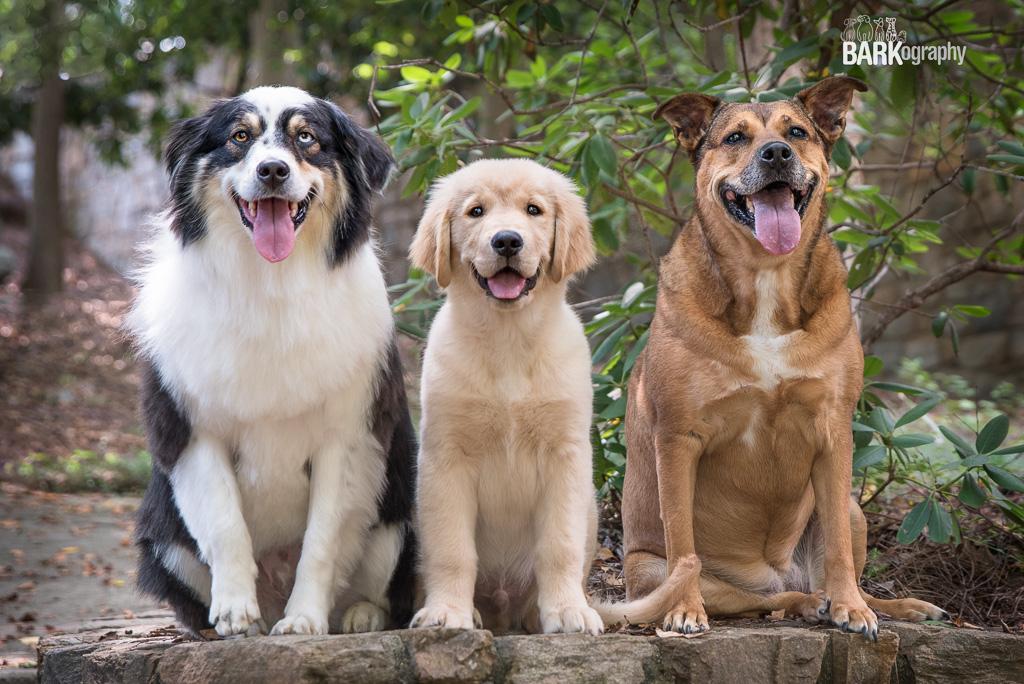 Bella, Berkeley and Fisher