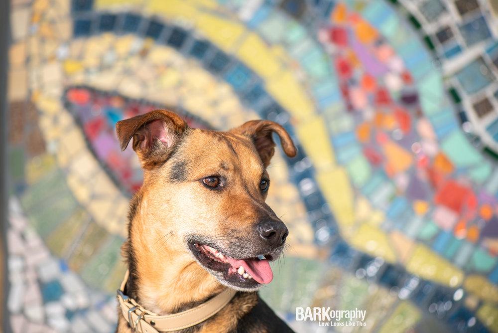 dog-photo-at-MoRAs-Embrace-Sculpture.jpg