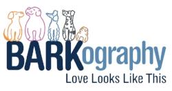 best Charlotte NC dog photographer