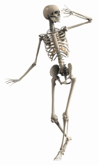 skeleton-2504343_1920.jpg