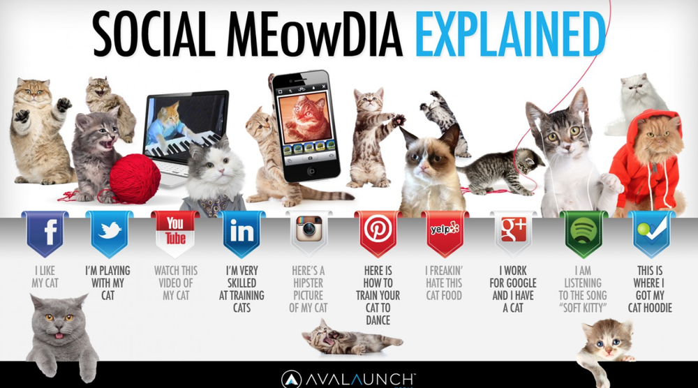 social-media-infographic-cats.png