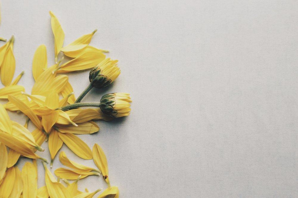 color-flora-flowers-945453.jpg