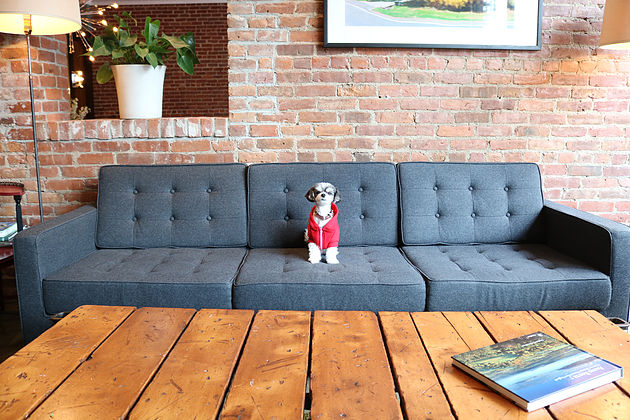 the lobby area is rustic, and a place where humans can get a snack, drink and hang with other pups and adventurers!