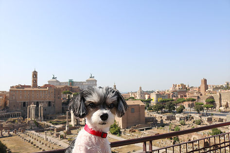 The Roman Forum and Ruins