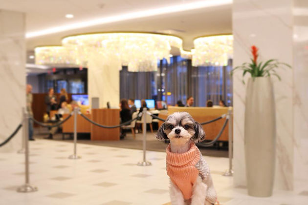 The rooms are extremely comfortable and Pets are always treated like humans at the Washington Hilton.