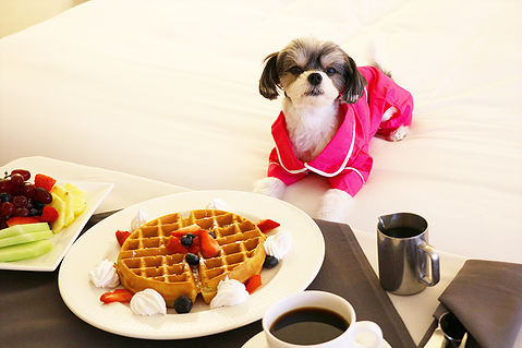 - For dining you can choose between 2 sit down restaurants or in room dining. The breakfast in bed was my favorite, OBVY!  my human who has food allergies to gluten and dairy though did have trouble finding options to eat and wouldn't recommend a person with allergies to eat at the hotel.