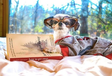 """Tinkerbelle relaxing and reading the getaway house signature book - """"how to get away"""""""