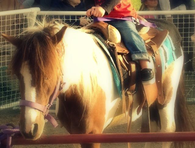 pony6.jpg