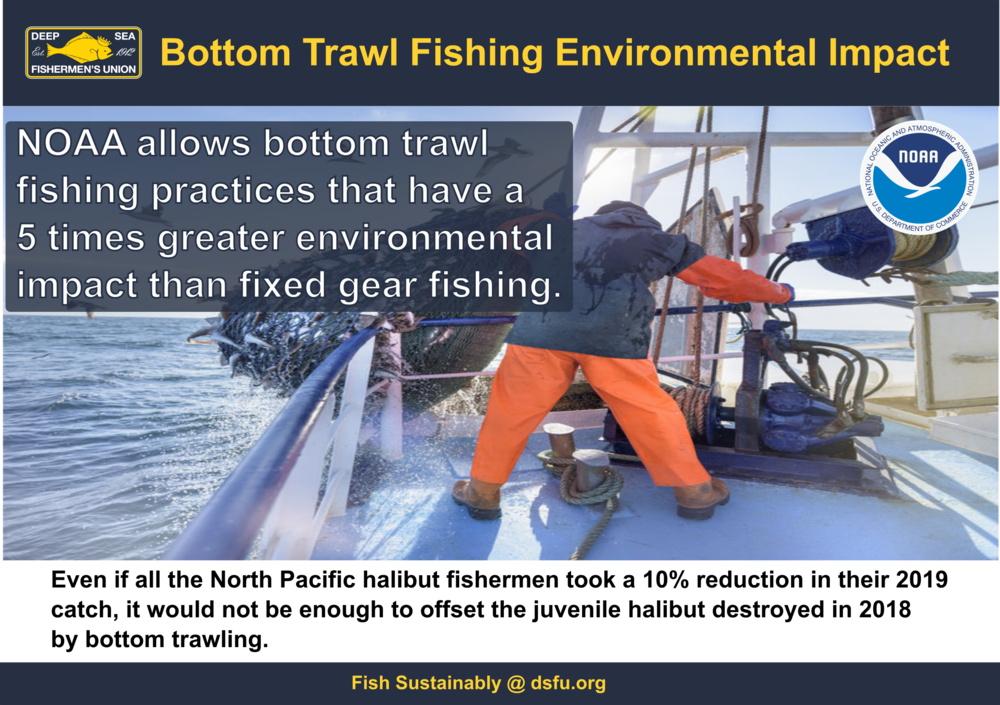 trawl environmental impact 1.0.png