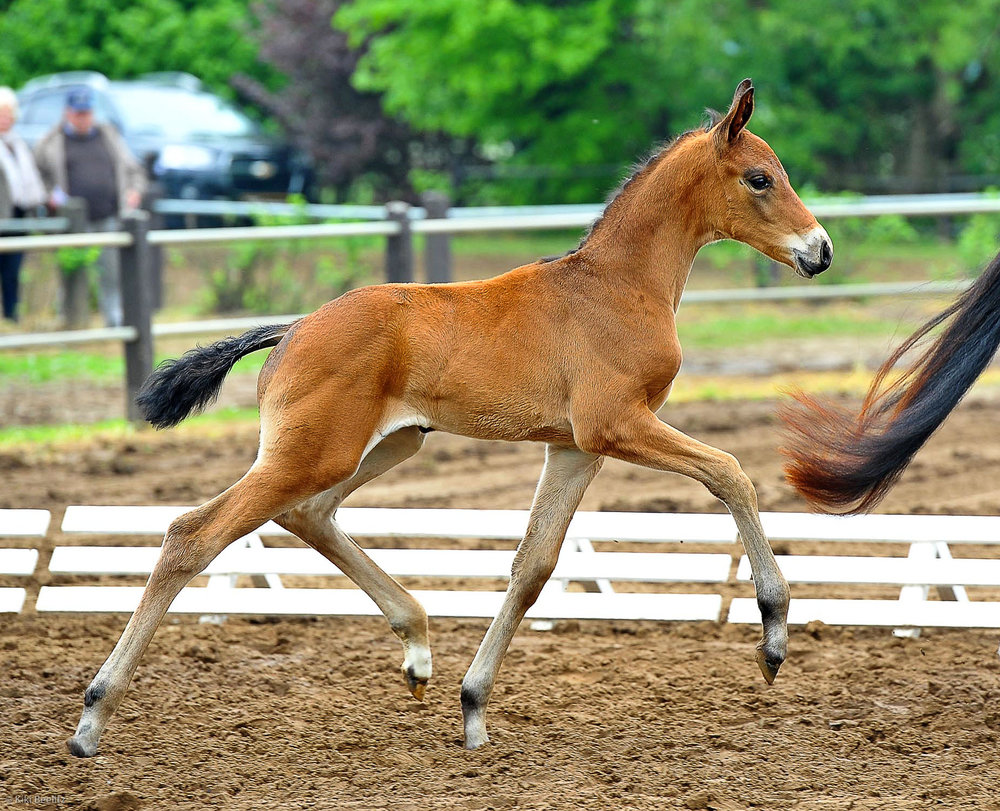 flashdancefoal.jpg
