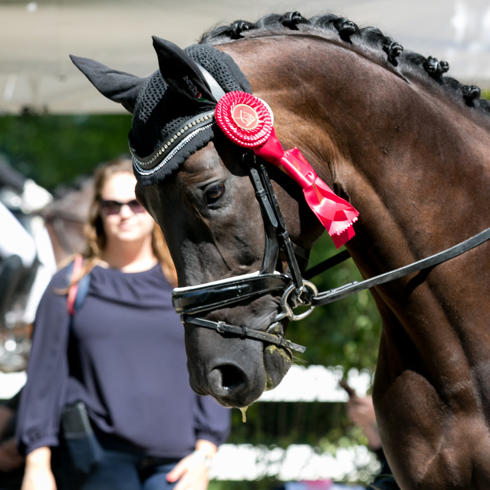 NEWS ABOUT Davos CF - Davos CF 2014 Dante Weltino/Rubinstein/Argentinus Stallion placed second in the Four Year Old Preliminary Test at Lamplight with a score of 8.26READ MORE ON HORSE DAILY