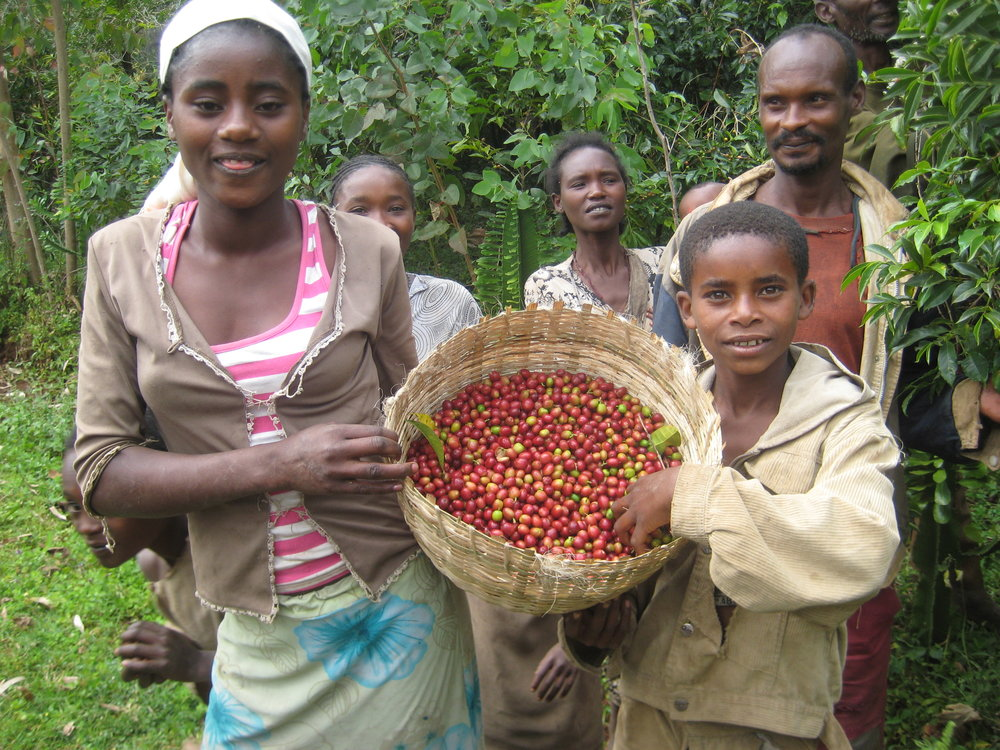 origin_farmers_fairtrade_organic_rainforest_coffeebeans_fresh.jpg