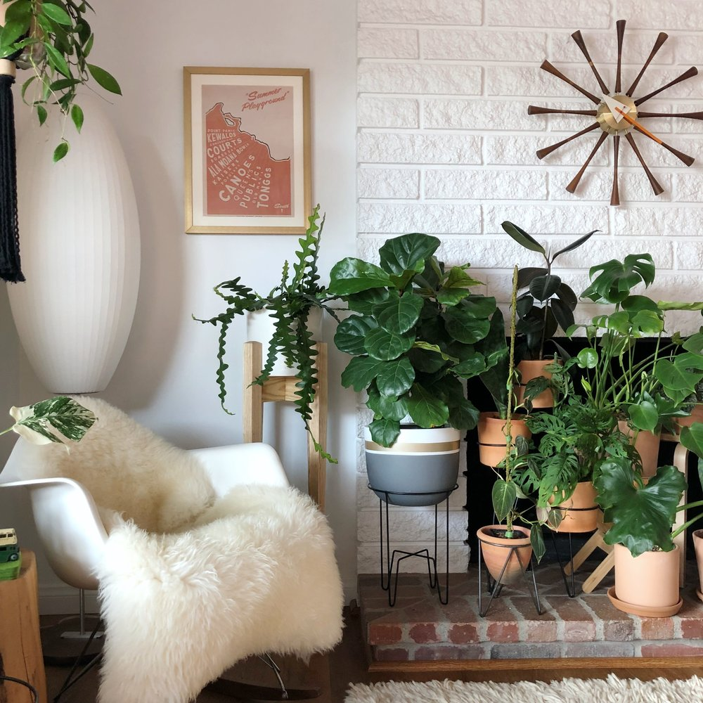 My Ficus lyrata (fiddle leaf fig) hangs out in a cachepot by Hudson and Oak (hudsonandoakshop.etsy.com, @hudsonandoakshop). Other planters in this photo are from brick and mortar sources including Eden San Diego, Folia Collective, Solana Succulents and Andersons La Costa. The photo also shows plant stands from Kellan Carr (@crowleykel), Ikea, Home Goods and Eden San Diego. See below for more on plant stands!