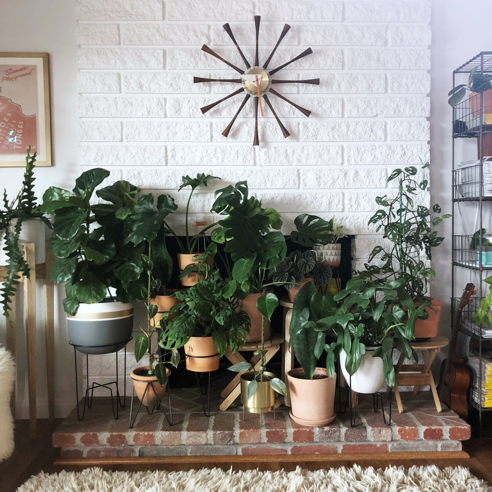 "My fireplace plant ""shrine"" of sorts is a bit too crowded for my taste here, but I was caring for plants that I had promised to others. I tend to feel more clear-headed with less clutter of any kind. Yes, even plants!"