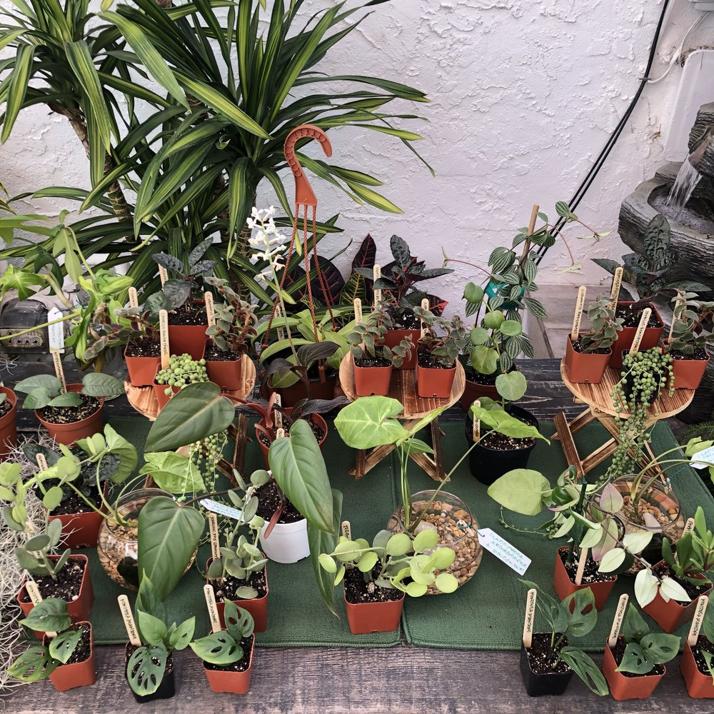 Some experienced plant swappers go all out. Here is Joseph @plantdaddy_sd's setup from the last swap. Plants are labeled and even on stands. This is not necessary but very cute and fun!