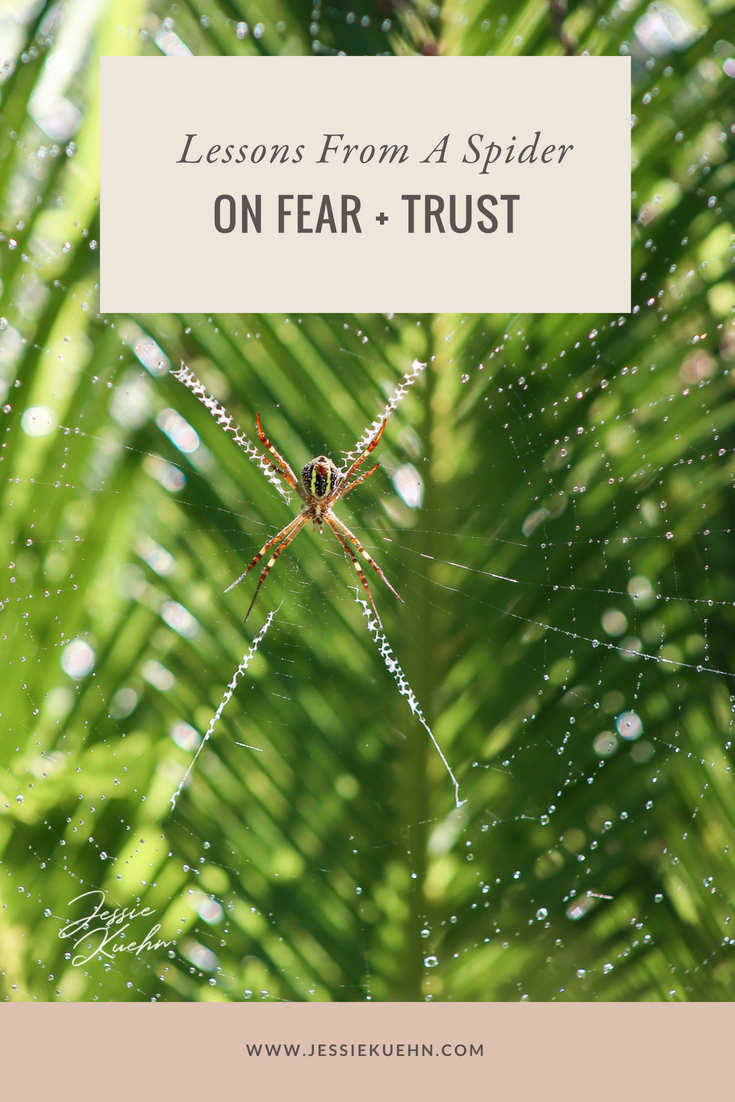Lessons From a Spider On Fear + Trust