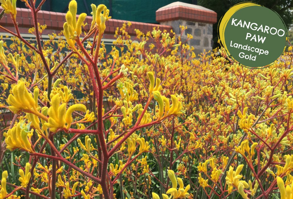 KP LG SAG site .jpg