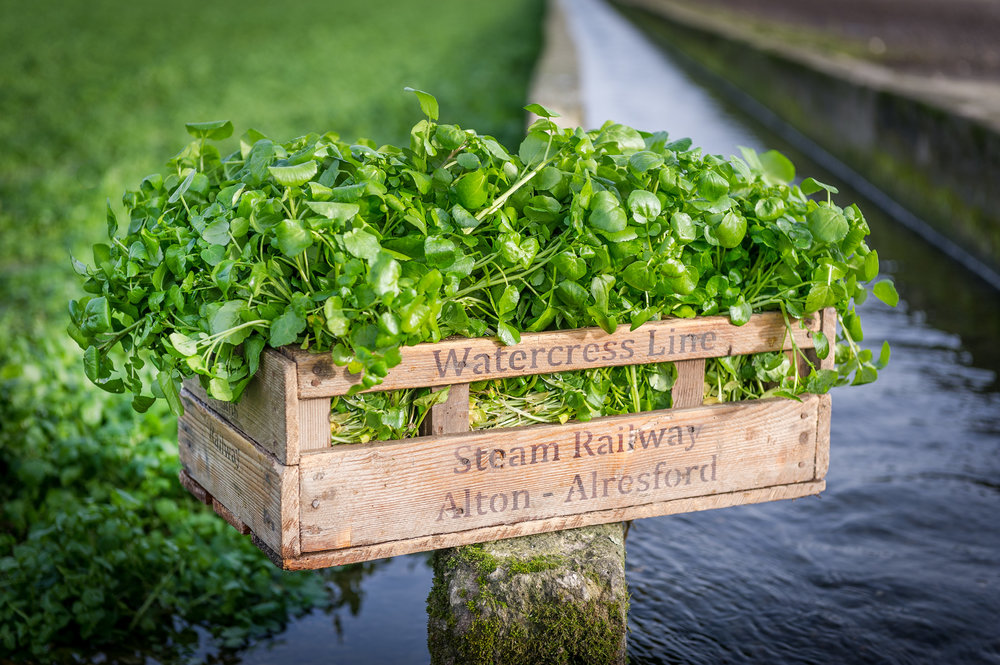 Watercress in wooden crate.jpg